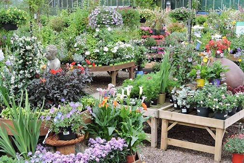 garden centre plant area showing colourful bedding and herbaceous plants in our undercover plant area