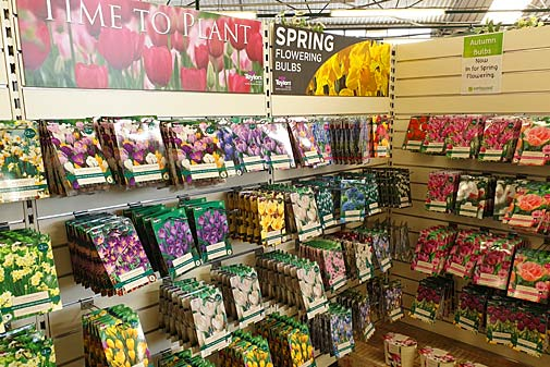 summer flowering bulbs and spring flowering bulbs