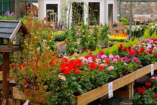 plant area featuring bedding plants, cottage garden plants, herbaceous perennials