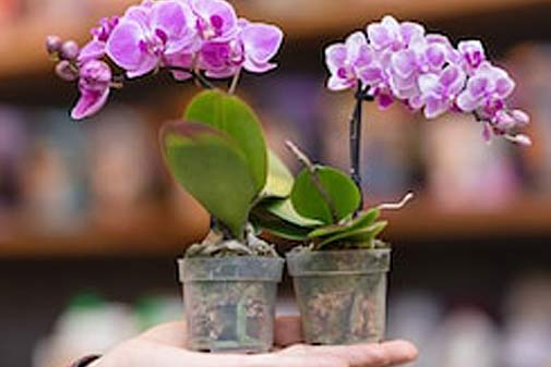 houseplants and orchids available in Guernsey