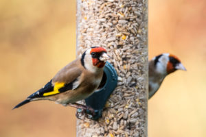 BIRD FEEDER WITH TWO GOLDFINCH