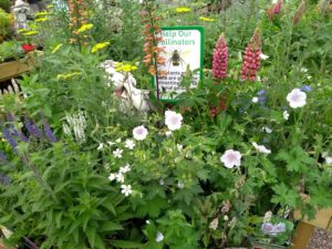 PLANTS FOR POLLINATORS IN OUR PLANT AREA