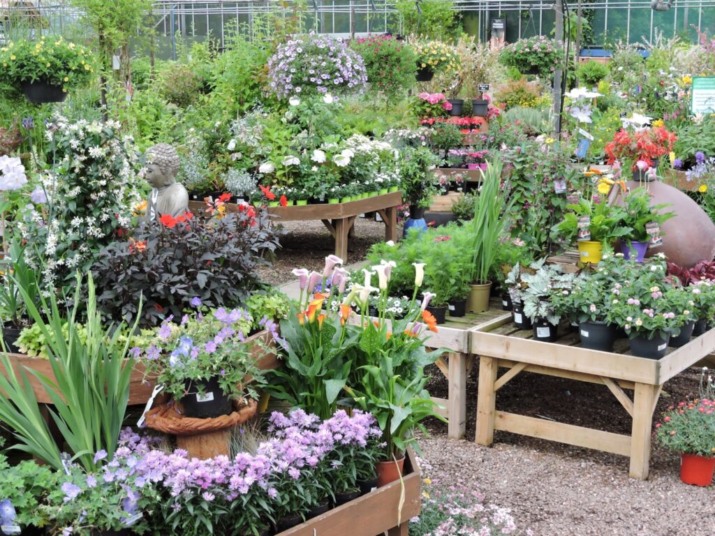 PLANTS FOR SALE AT EARLSWOOD GARDEN CENTRE GUERNSEY