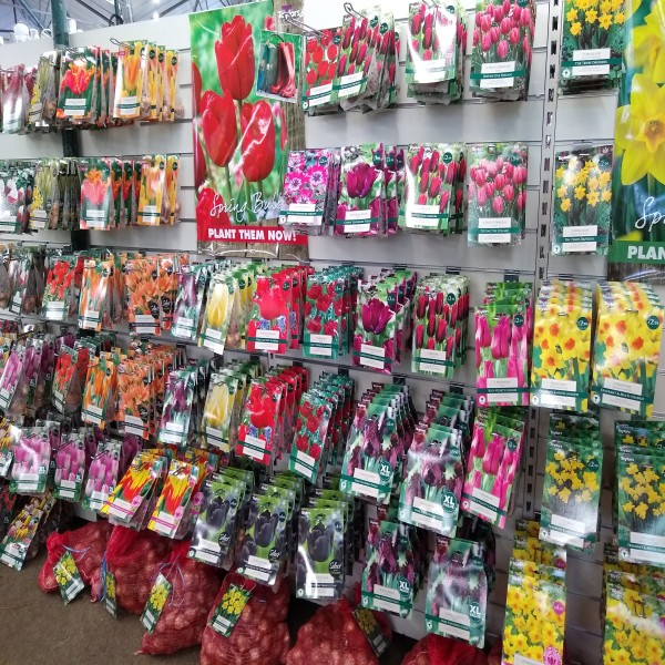 SPRING FLOWERING BULBS FOR SALE AT EARLSWOOD GARDEN CENTRE GUERNSEY