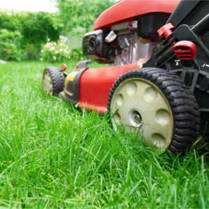adjust your mowing for autumn lawn care with earlswood garden centre guernsey