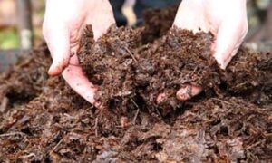 october garden jobs make leaf mould with earlswood garden centre guernsey